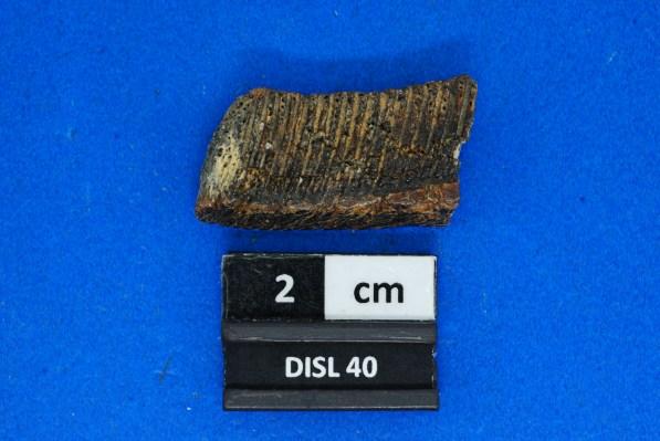 40b Fossil pufferfish beak and teeth. (Jun Ebersole)