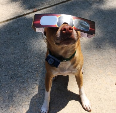 Even dogs got in on the eclipse watching. (contributed)