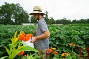 Andrew Kesterson harvests flowers at Belle Meadow Farm. (Mark Sandlin/Alabama NewsCenter)