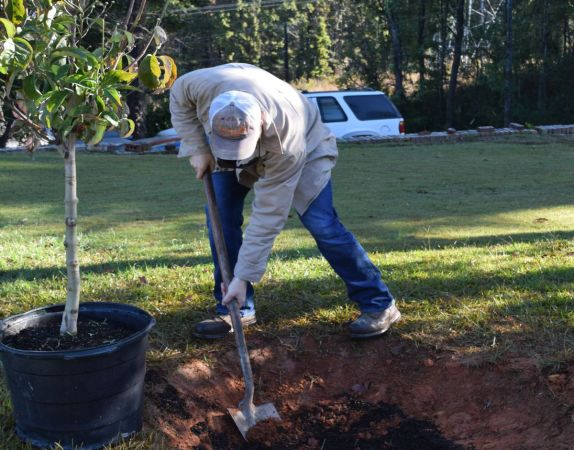 Line Clearing Specialist Blake Lipscomb said it's important to dig deep enough for tree roots to spread evenly. (Donna Cope/Alabama NewsCenter)