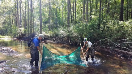 Aquatic conservation biologist Bernie Kuhajda and Eric Spadgenske, state coordinator for the U.S. Fish and Wildlife Service, check for vermilion darters upstream of the spot where a dam used to stand across Turkey Creek. (Freshwater Land Trust)
