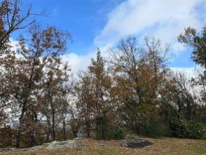 Leaves are falling, but enough beauty remains to enjoy in Alabama. (Dan Bynum / Alabama NewsCenter)