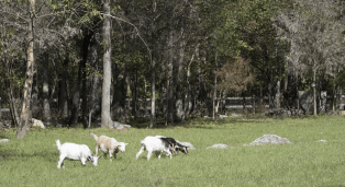 Leeds retains plenty of rural landscape. (Brittany Faush / Alabama NewsCenter)