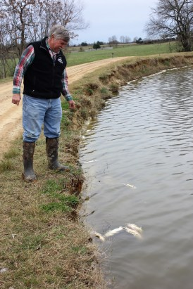 Greensboro catfish farmer Bill Kyser spots some dead fish in one of his ponds. Kyser said the disease columnaris has cost his family a lot of fish and a lot of money. (Robert DeWitt / Alabama NewsCenter)