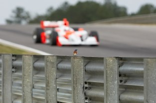 A spectator takes in the action from a privileged spot. (Barber Motorsports Park and Museum)