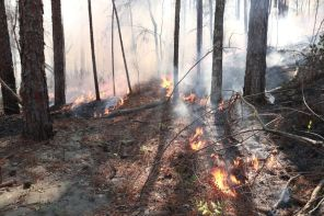 Prescribed burns, according to Chris Wyatt, are good for the longleaf forest system. He oversaw this prescribed burn near Smith Mountain on Lake Martin. (Phil Free/Alabama NewsCenter)
