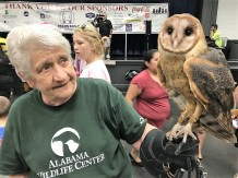 The barn owl and Kevorkian were stars for the day. (Donna Cope/Alabama NewsCenter)