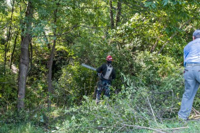 Workers remove invasive plants from the Village Creek area in East Lake Park. (Charlestan Helton/Alabama NewsCenter)
