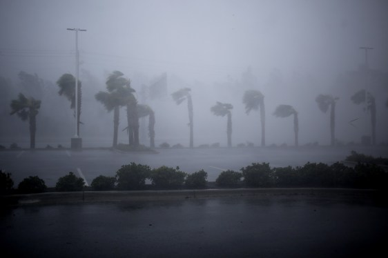 Palm trees stand as Hurricane Michael makes landfall in Panama City Beach, Florida. (Luke Sharrett/Bloomberg)
