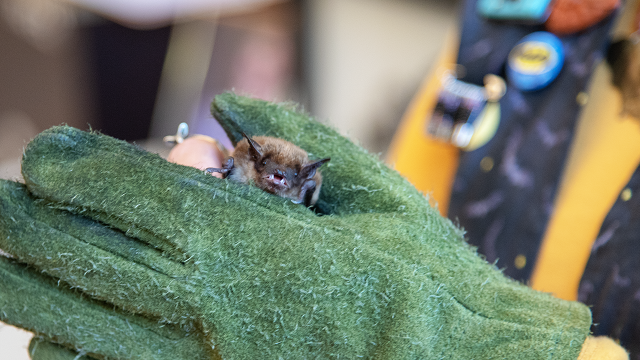 Alabama caves will become less spooky for endangered bats