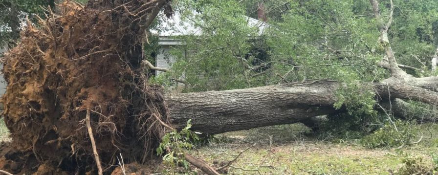 Trees were uprooted in the storms wake. (Wynter Byrd)