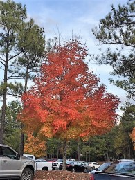 The range of reds, yellows and oranges blending with the greens and blue skies give color to Alabama this fall. (Alabama NewsCenter)