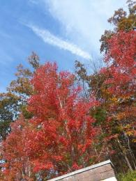The range of colors are on full display across Alabama in places like Lagarde Park in Anniston. (Tracy Thomas)