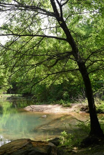 Turkey Creek Nature Preserve. (Phil Free / Alabama NewsCenter)