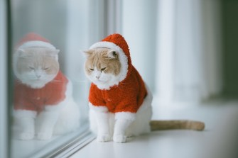 Pets can be a part of holiday fun, but some precautions are necessary to make sure they stay healthy through the season. (Getty Images)