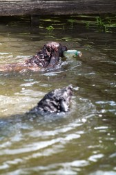 Sometimes even man's best friend gets into the spirit of cleaning up our waterways. (file)