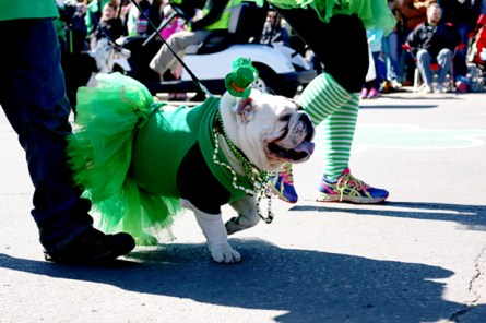Enjoy a dog parade, contests and more. (Birmingham Hammerfest)