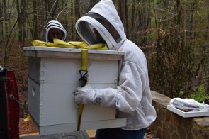 The duo carefully transport the hives from Hickman's truck to the stand. (Donna Cope/Alabama NewsCenter)