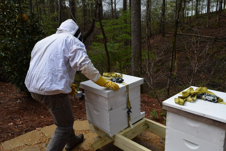 Hickman moves the hives carefully. (Donna Cope/Alabama NewsCenter)