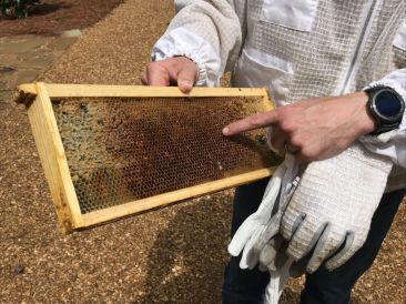The bees are making honey. (Donna Cope/Alabama NewsCenter)