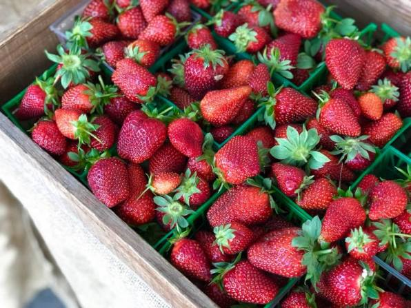 Buy farm-fresh strawberries. (Contributed)