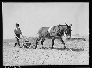 Coffee County peanut farmer plants peanuts in 1939. (Library of Congress, Prints and Photographs Division)
