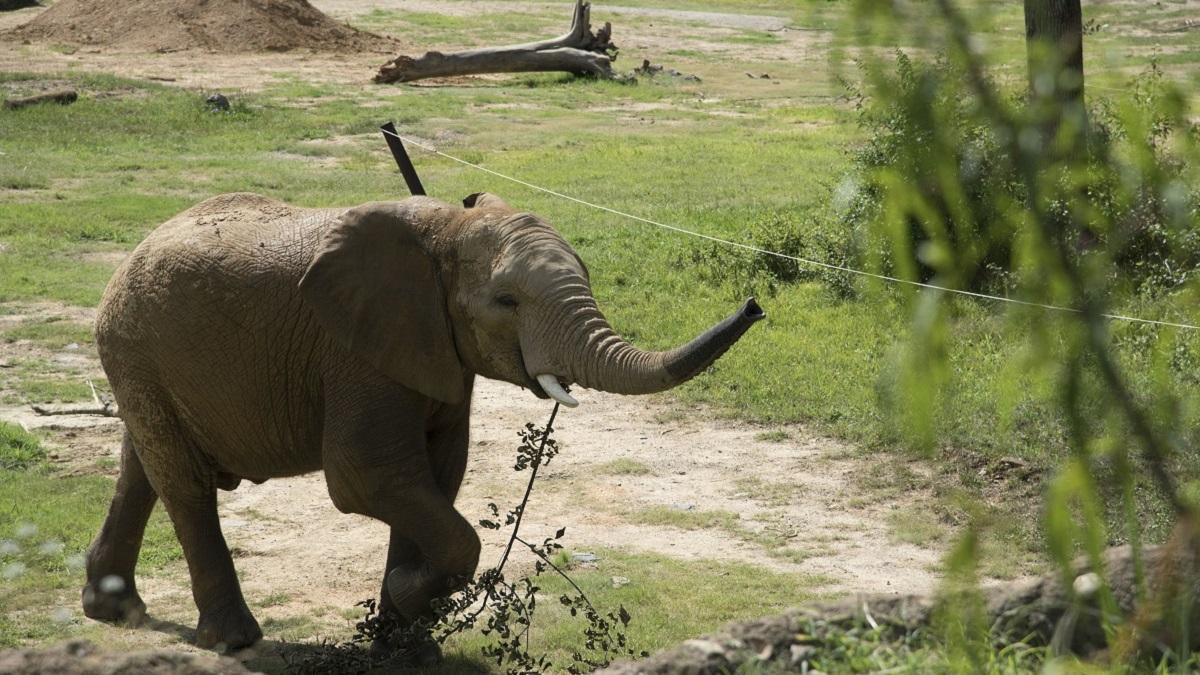 Birmingham Zoo adopts new elephants, opens welcome center