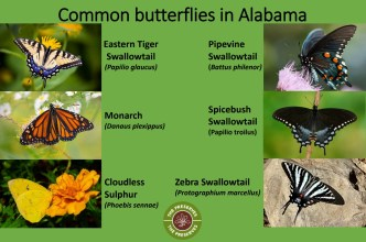 Interpretive signs help point out features, including butterflies to look for on pollinator plots, at The Preserves on Alabama Power lakes. (contributed)