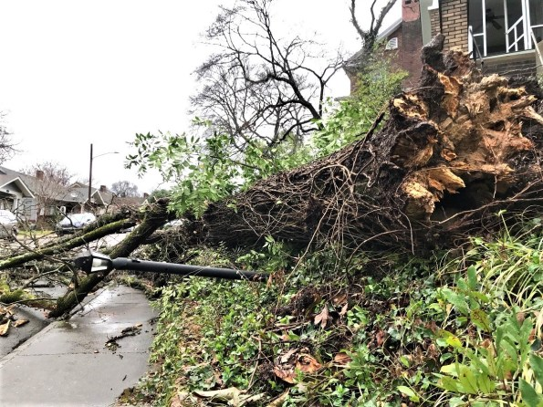 Storms caused damage across the state, including knocking down this tree and light in Birmingham's Forest Park neighborhood. (Michael Sznajderman / Alabama NewsCenter)