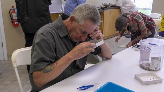 Volunteers examine beach sand from Dauphin Island looking for fossils. (Angela Levins / Dauphin Island Sea Lab)