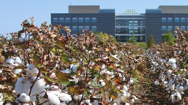 HudsonAlpha researchers work toward incredible cotton improvements through genetics