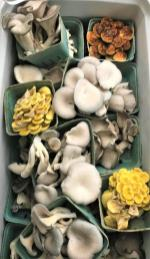 Mushrooms for sale at the Irondale Farm Stand. (Bradleigh Turnipseed Pfitzer)