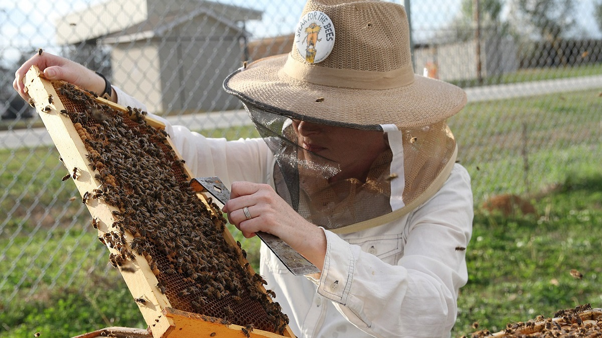 Researchers, agencies, beekeepers work together to fight losses in honey bee colonies