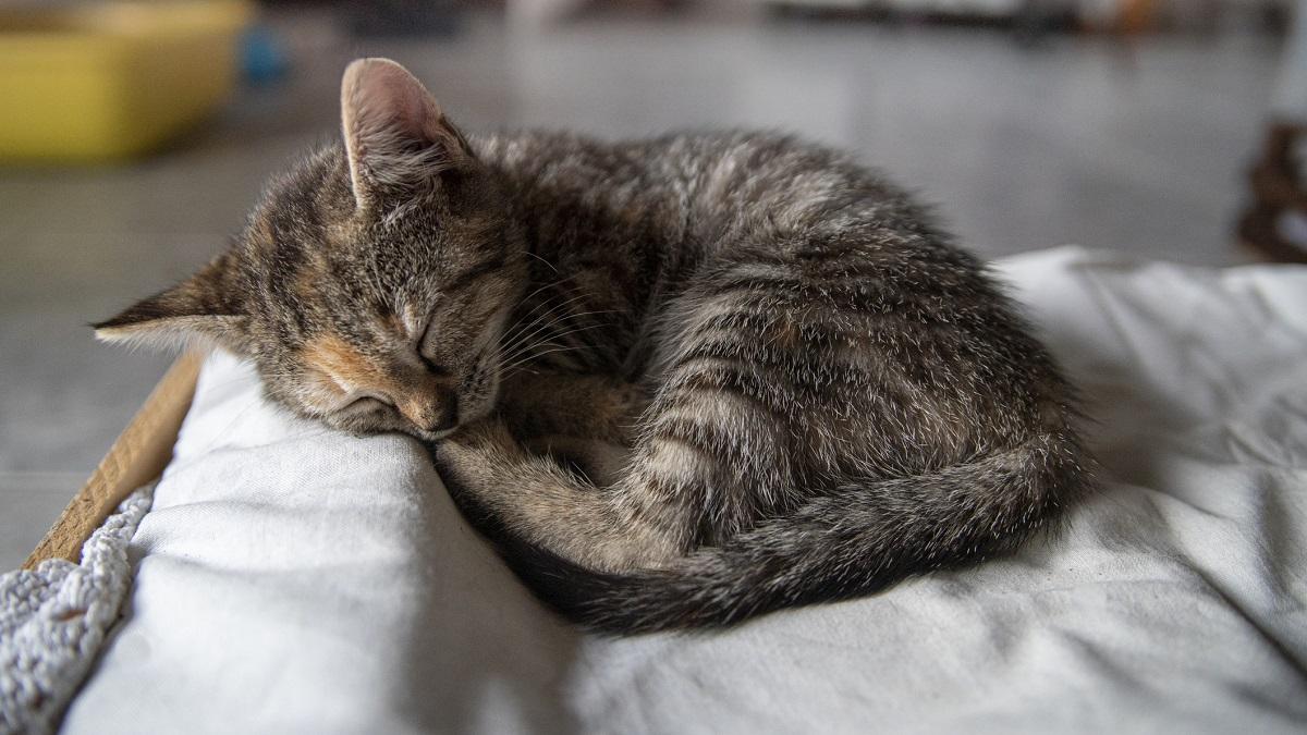 Auburn University veterinarian offers tips for adopting a cat