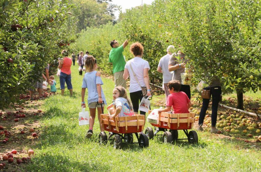 Scott's Orchard offers more than a dozen varieties of apples. (Scott's Orchard / Alabama NewsCenter)