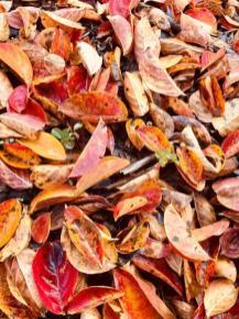 Contrasting colors enlivened by sunlight make Alabama autumns special. (Michael Sznajderman / Alabama NewsCenter)