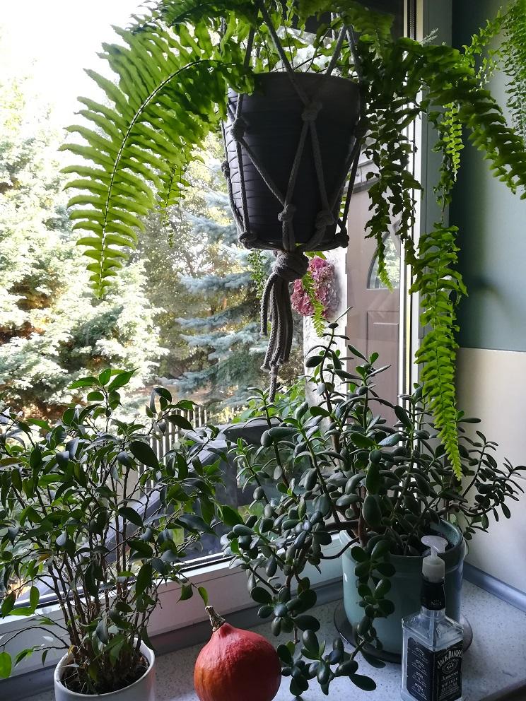 Rośliny w makramach