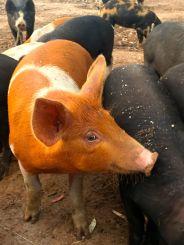 Mmmm... bacon....
