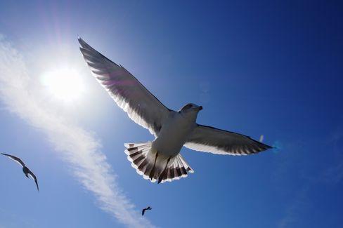 【動画】大空を自由に飛ぶワシの目線でカメラをつけた結果、想像もできない絶景が広がる! 世界はこんなにも美しい・・・