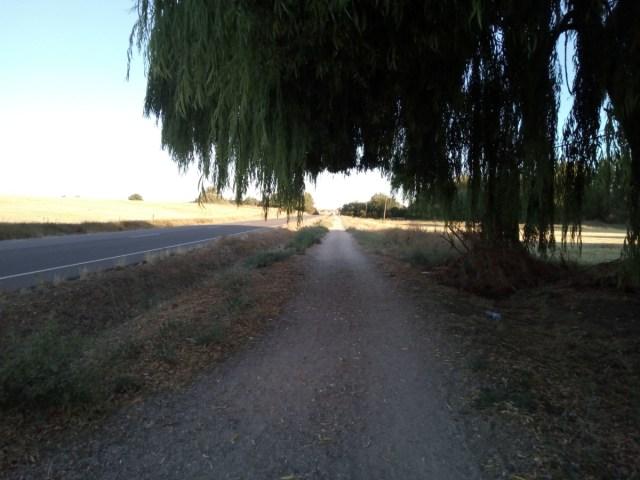 El camino bajo sauces llorones