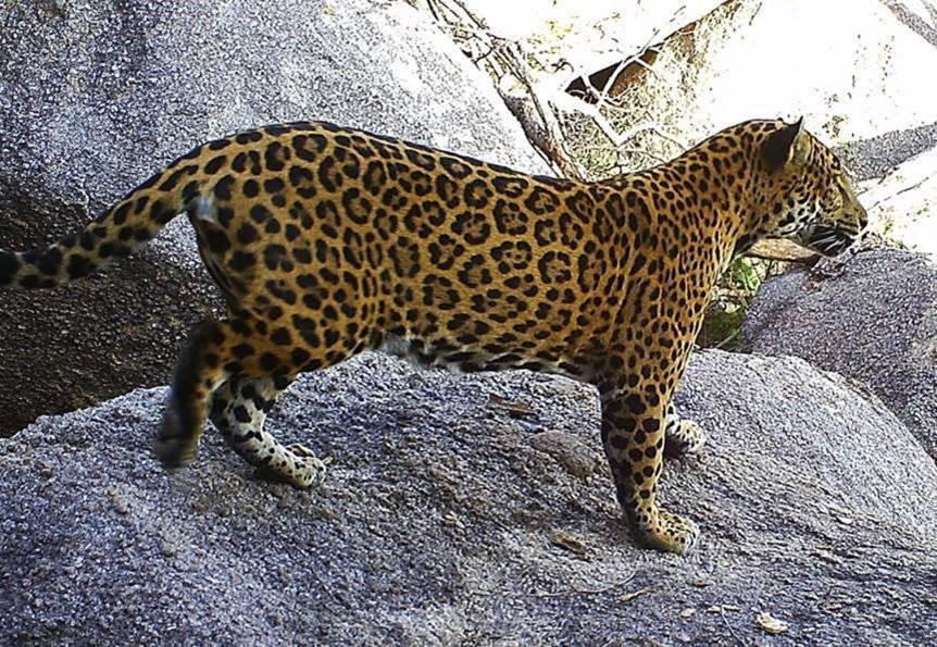 Día Internacional de la Tierra: 13 proyectos conservacionistas de América Latina son premiados por Disney, que además ofrecerá programación especial para celebrar esta fecha.