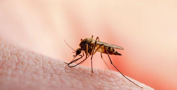Atasi Malaria Dengan Bahan Alami