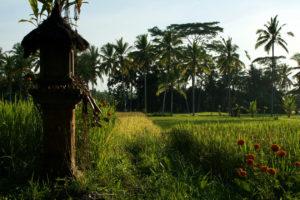 Rizières de Kelabangmoding à Bali