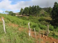 Cerro Golondrina