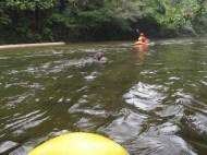Fulo feliz en el agua