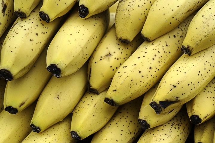 لماذا تهوى القرود آكل الموز؟