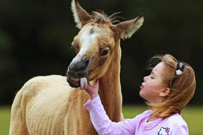 متلازمة داون حصان