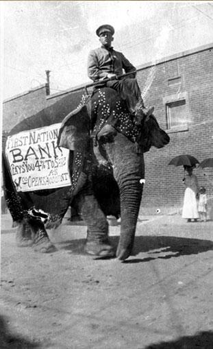 الفيلة ماري