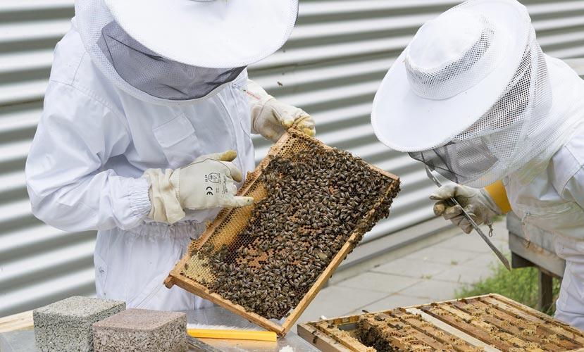 كيف أعرف عسل المانوكا الأصلي