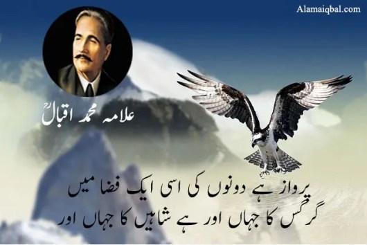eagle poetry in urdu